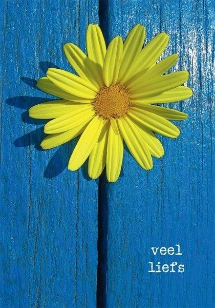 Gele Bloem Op Blauw Hout